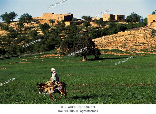 Man riding on a mule near Tanant, Middle Atlas mountains, Morocco