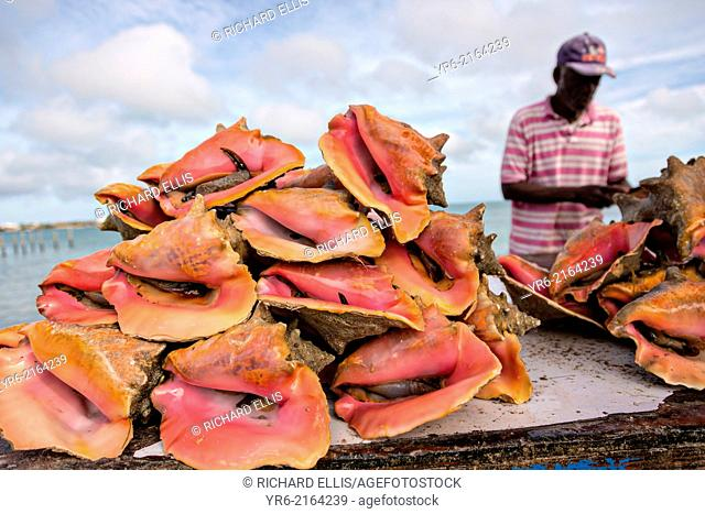 Live fresh conch at the fresh fish market Montagu beach Nassau, Bahamas