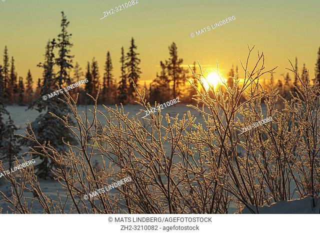 Winter landscape in direct light, making the frost glowing, nice warm light, Gällivare county, Swedish Lapland, Sweden