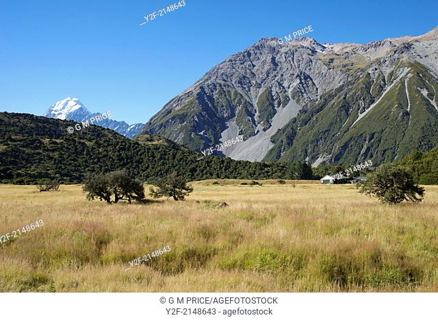 trees, grassland, mountainside and glimpse of Mount Cook, New Zealand
