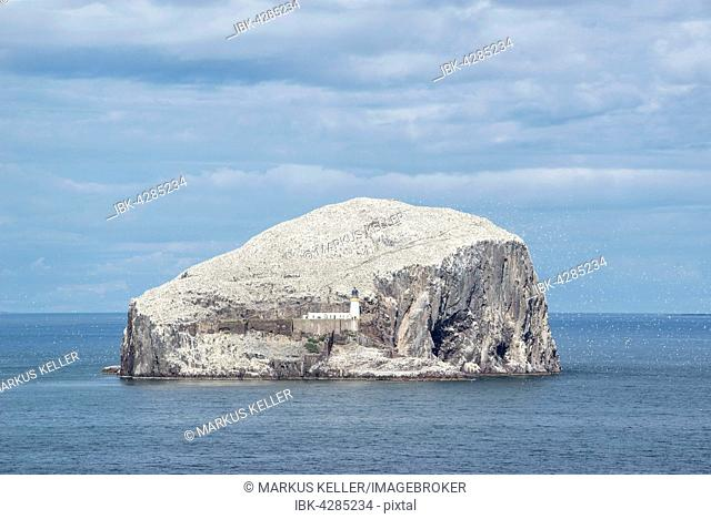 Bass Rock, volcanic rocks and gannet colony in the Firth of Forth at North Berwick, East Lothian, Scotland, United Kingdom