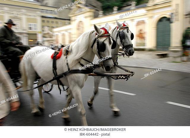 Horses with carriage, Salzburg, State of Salzburg, Austria