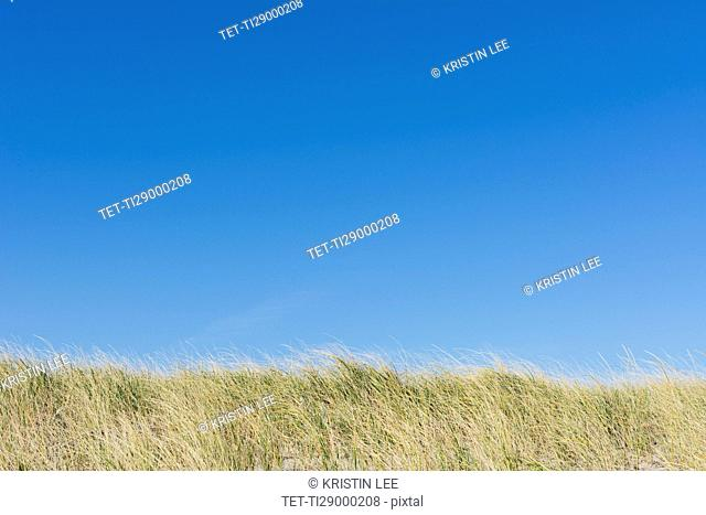 Clear blue sky above field of grass