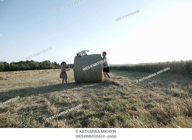 Two children playing with cat on a harvested field
