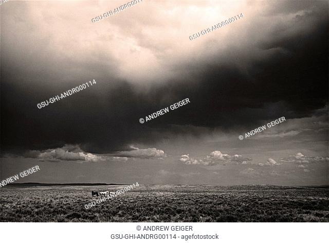 Ominous Dark Cloud Over Arid Landscape, Montana, USA