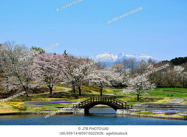 Japan, Tohoku Region, Miyagi Prefecture, Shibata, Kawasaki, View of Michinoku Forest and cherry tree