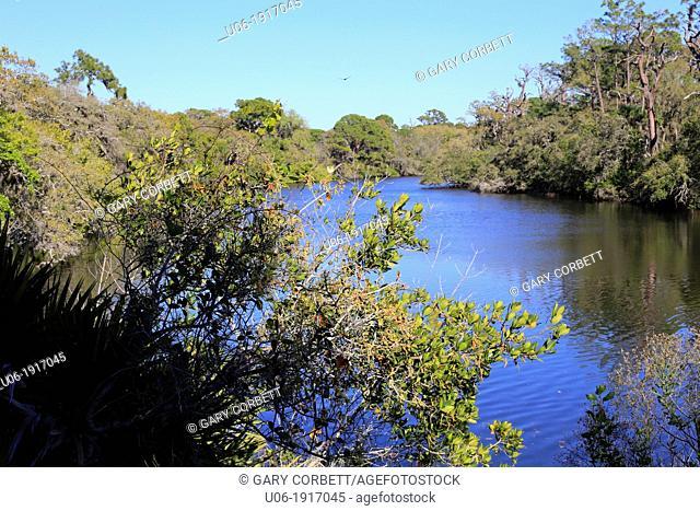 a hiking trail in Oscar Scherer State Park, Florida, USA