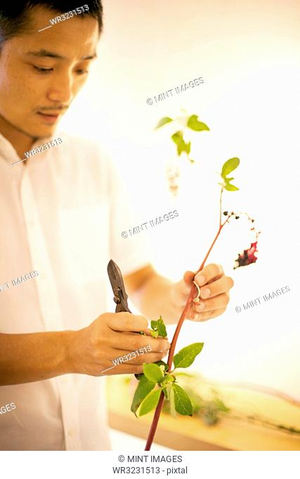 Japanese man standing in flower gallery, working on Ikebana arrangement