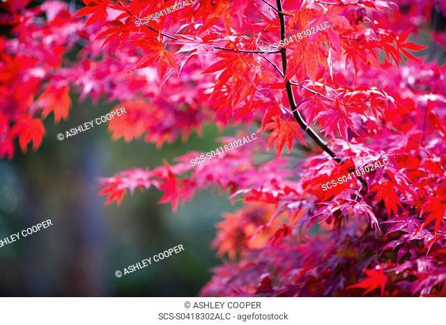 Autumn colours at Thorp Perrow Arboretum in Yorkshire UK