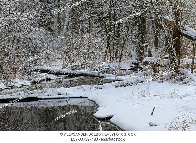 Winter cloudy day by forest river with fresh snow, Bialowieza Forest, Poland, Europe