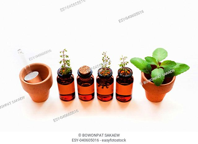 Holy Basil Essential Oil in a Glass Bottle with Fresh Holy Basil leaves and flower on white background
