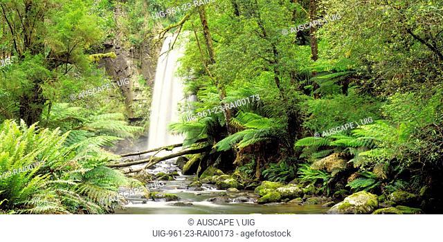 Hopetoun Falls, in temperate rainforest. Otway National Park, southwest Victoria, Australia