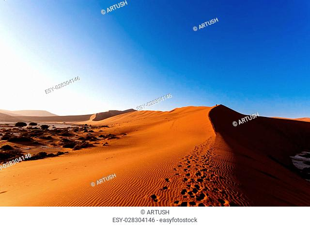 Landscape of dunes in sossusvlei with wind shapes the sand dunes, Namibia, sunrise scene