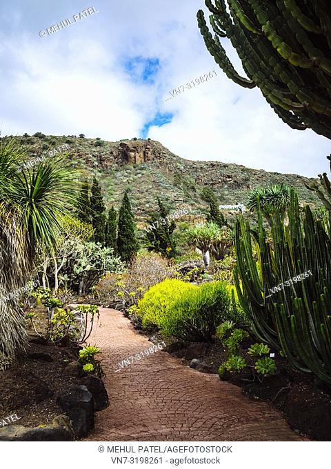 Cactus garden (Jardín de cactus y sucelentas) in the botanical gardens of Gran Canaria (Jardín Botánico Canario Viera y Clarijo), Canary Islands, Spain, Europe