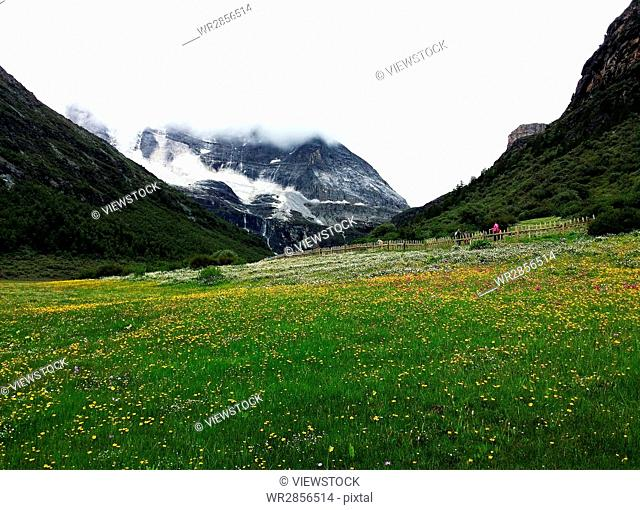 Luorong Farm of Daocheng County,Sichuan province,China