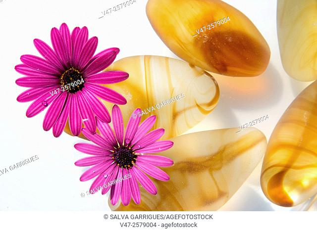Photograph of a pond with water and rocks amber and floating flowers. Photo studio on white background