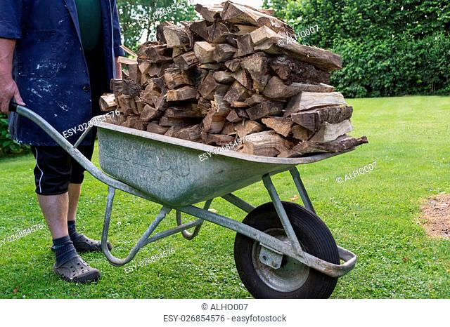 Person brings with wheelbarrow a dried firewood