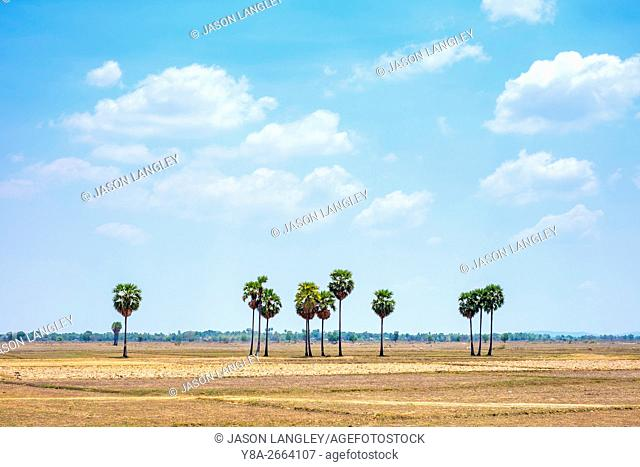 Empty rural landscape with palm trees near Kampong Svay, Kampong Thom Province, Cambodia