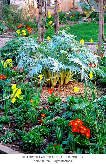 Spring flower bed with cynara, primula, narcissus, Bulbs flowers and leaves