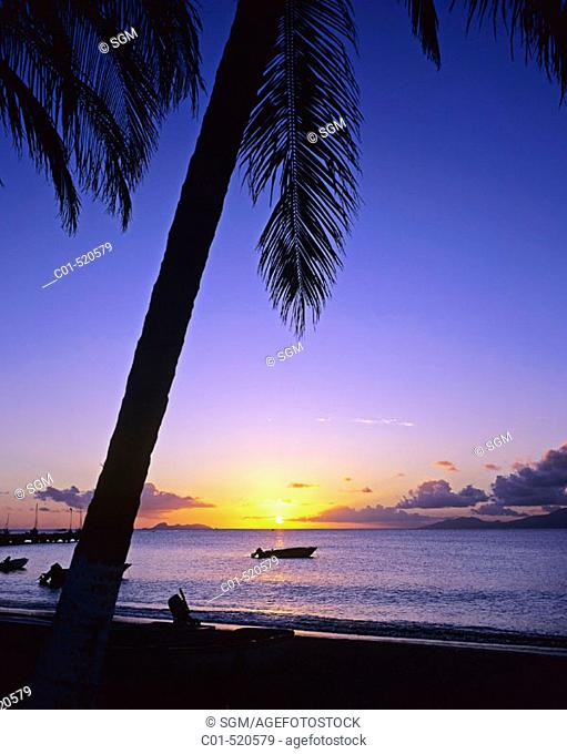 Fishing boat, palm tree and sea at sunset. Guadeloupe, Caribbean, France