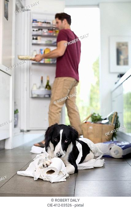 Dog chewing up toilet paper in kitchen