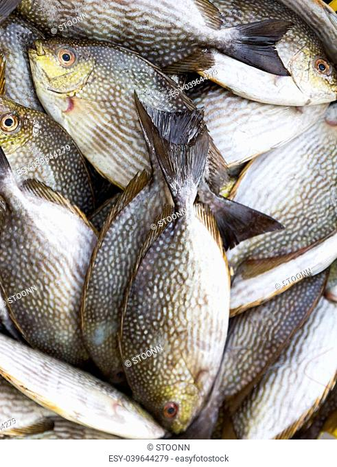 Rabbitfish or Spinefish in fresh market for sale