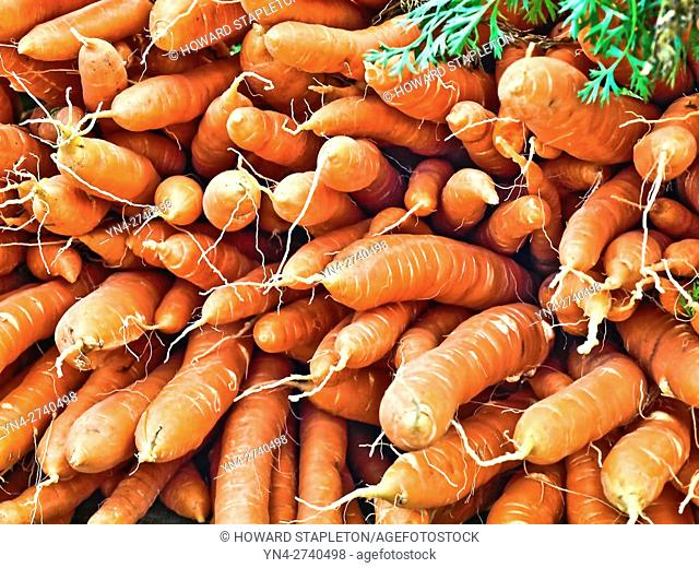 Carrots at the farmer's market at Copley Square. Boston, Massachusetts