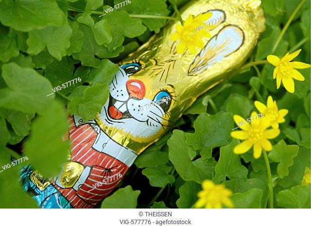 chocolate easter-bunny lying on meadow in flowers of lesser celandine Ranunculus ficaria. - 25/04/2006