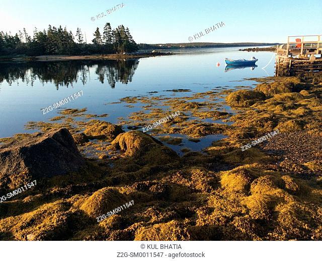 Rocks and seaweed gleam in the early morning light, Halifax, Nova Scotia, Canada