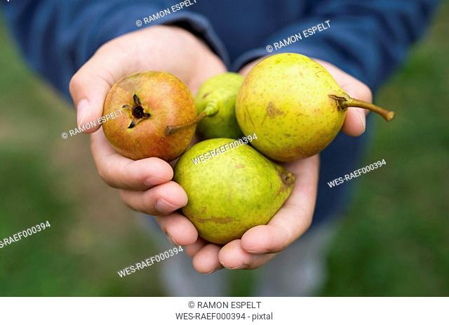 Hands of a boy holding pears
