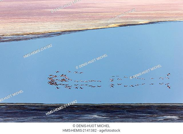 Kenya, lac Magadi, flamant nain (Phoeniconaias minor), vue aérienne