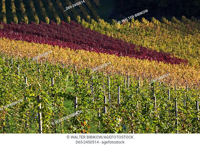 Germany, Baden-Wurttemburg, Black Forest, Gengenbach, hillside vineyards, fall