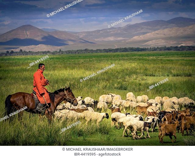Nomad, rider on horseback with goats and sheep, Mongolia