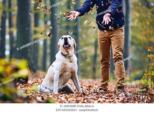 Man with dog in forest. Pet owner of labrador retriever enjoying from autumn