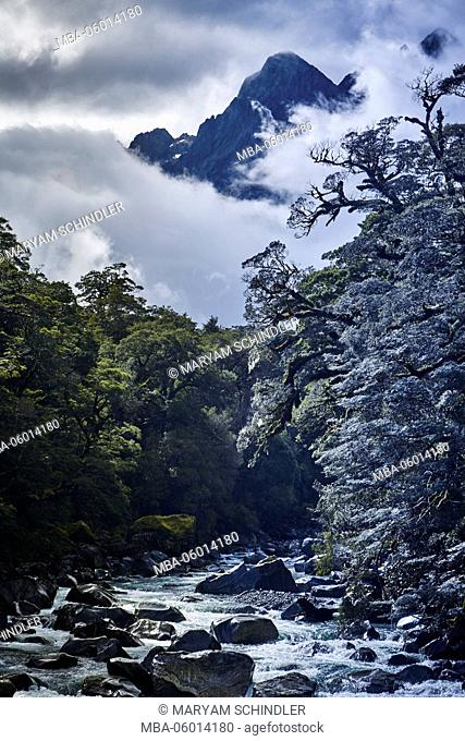 New Zealand, south island, Fiordland, river through rainforest, mountain tops in the background, cloudy