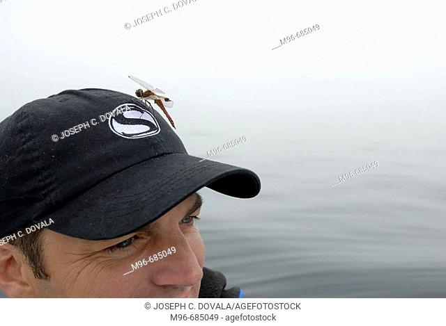 Dragon fly lands on hat at sea miles from land Santa Barbara Channel, CA. USA