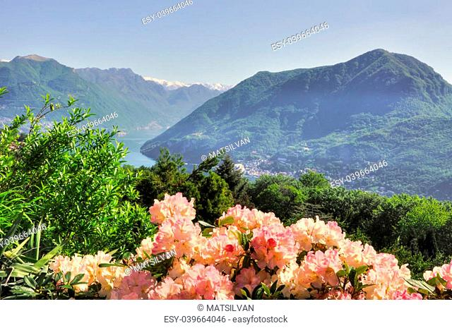 Flowers and snow-capped mountain