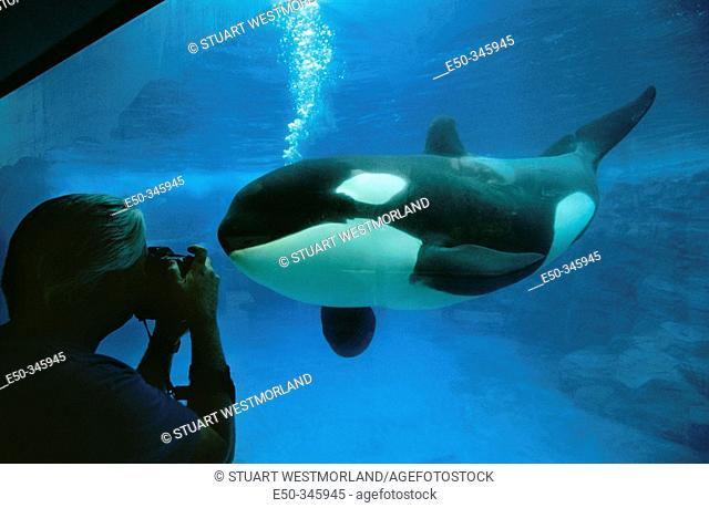 Tourist photographing Killer Whale at Seaworld. Florida