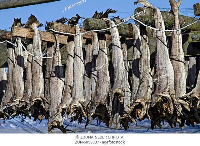 Stockfish at Lofoten