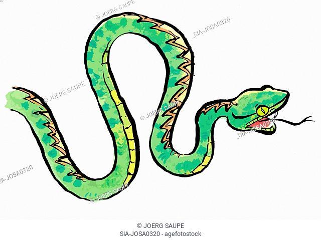 Green snake hissing