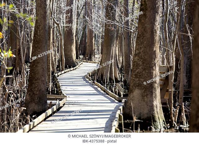 Boardwalk through the Congaree National Park, South Carolina, USA