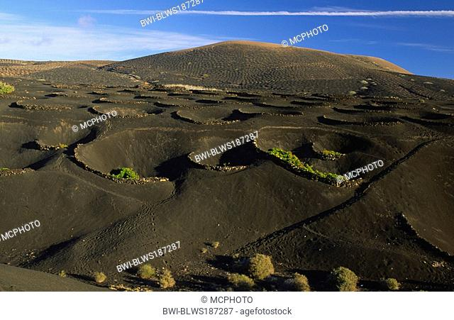 Typical wine yard between La Geria and Masdache, Canary Islands, Lanzarote