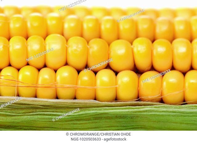 Corn, Zea mays