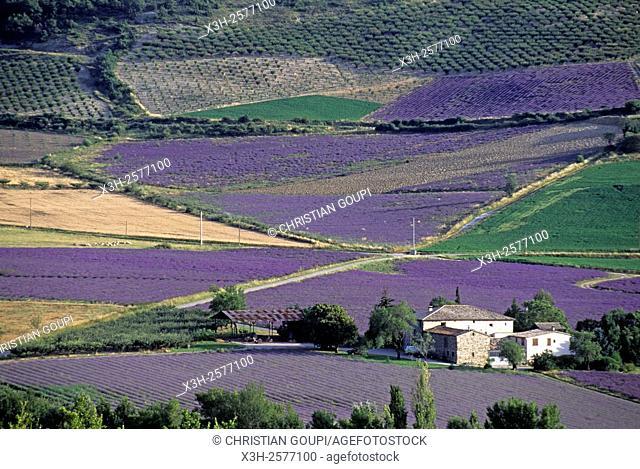 Lavender fields in the valley of Sainte-Jalle, Drome department, Rhone-Alpes region, southeastern France, Europe