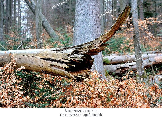 Wind break, damages, forest damages, wood, forest, bark beetle, storm damages, trees, forest decline, spruces, Germany, Europe