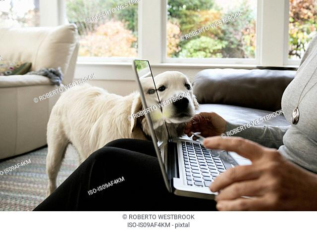 Close up of senior woman shopping online at home