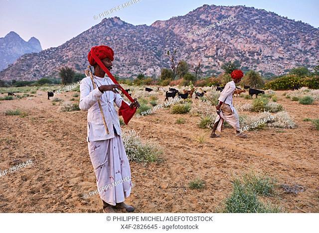 India, Rajasthan, Meda village around Jodhpur, Rabari ethnic group, shepherd