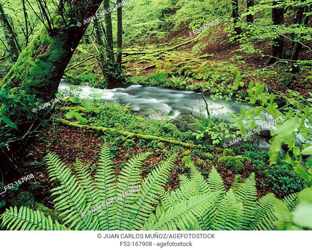 Parque Natural del Señorío de Bértiz. Baztán Valley. Navarre. Spain