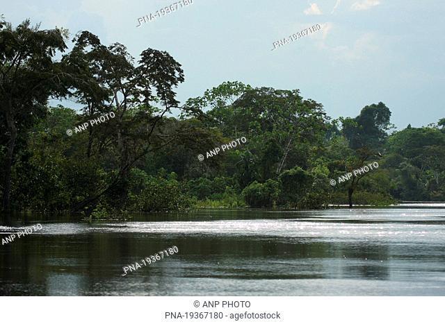 Tamshiyacu Tahuayo Reserve, Amazone, Loreto, Maynas, Peru, South America
