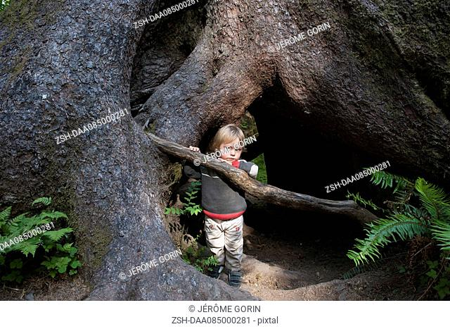 Child hiding behind roots of old growth tree